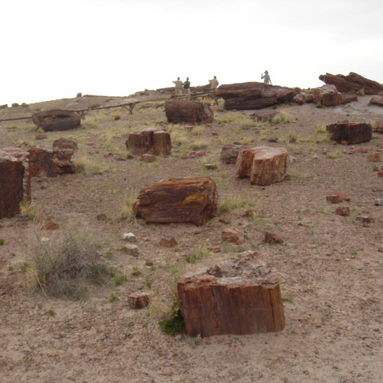 Petrified wood at Petrified Forest National Park.