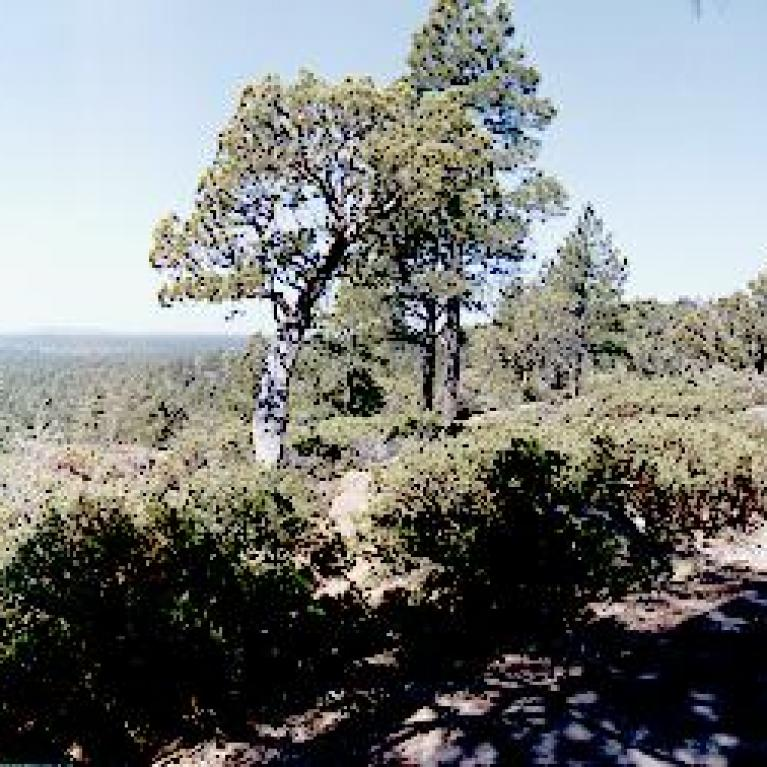 The Mogollian Rim is the high cliff that separates the pine-forested Colorado Plateau from the desert below.