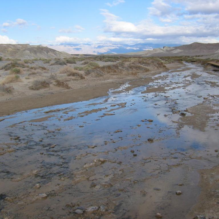 Day 4. Salt Creek at Death Valley, which featured flowing water and desert pupfish.