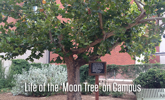 The Life of the 'Moon Tree' on Campus
