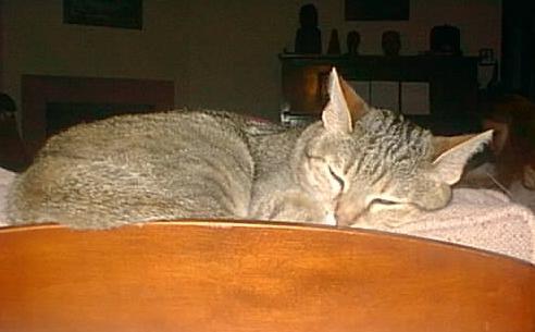 cat valium